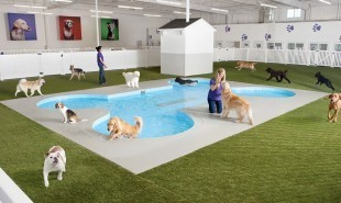 Luxury airport terminal for precious animals