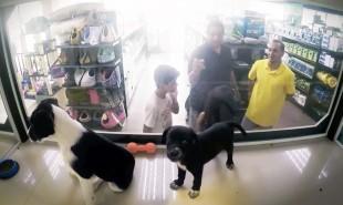 Brazilian pet shops display shelter animals in secret