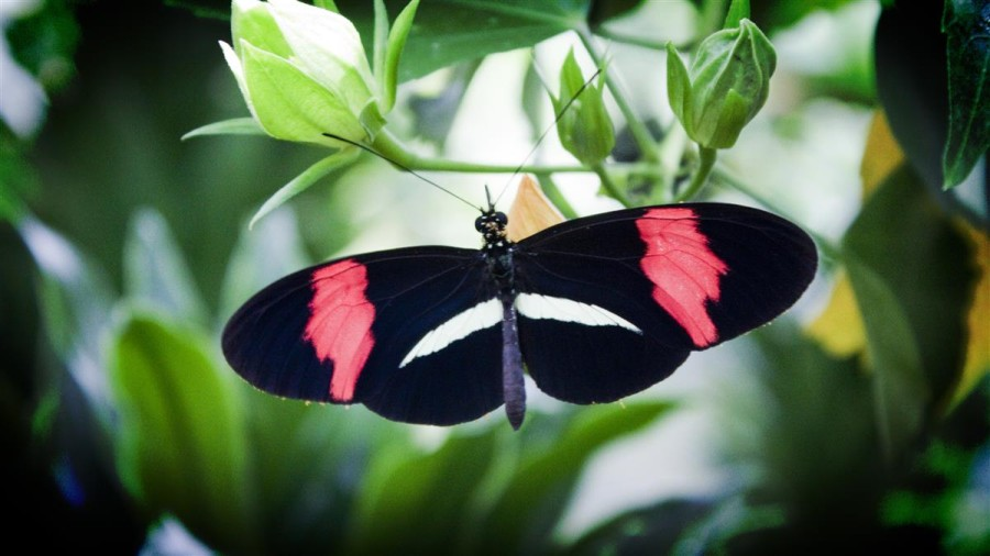 Get those butterflies flying in formation – 10 Tips for the Nervous Presenter